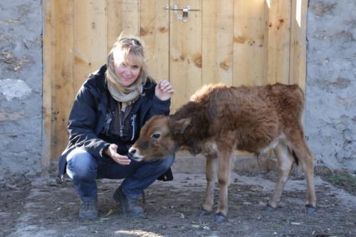 Geistige Behandlung von Tieren